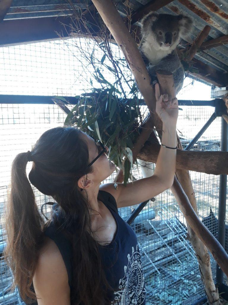 australie-jobs-koala-temoignage
